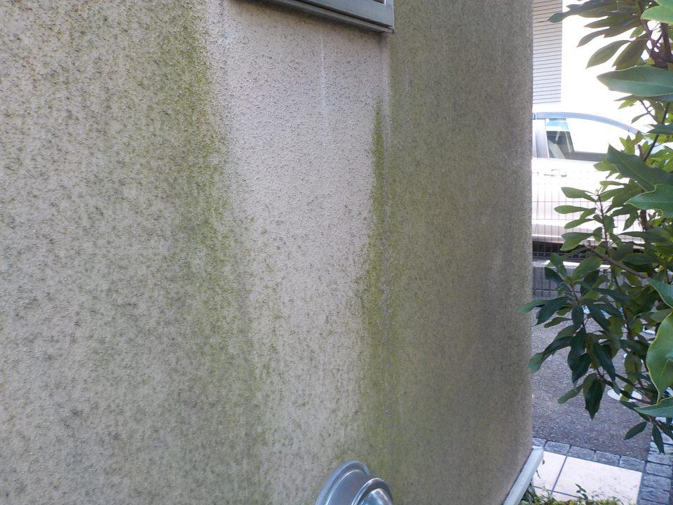 苔やカビのある外壁
