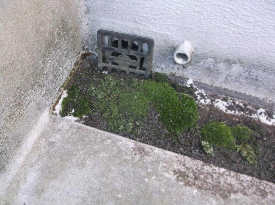 ベランダ・バルコニーに藻や植物が生えている様子